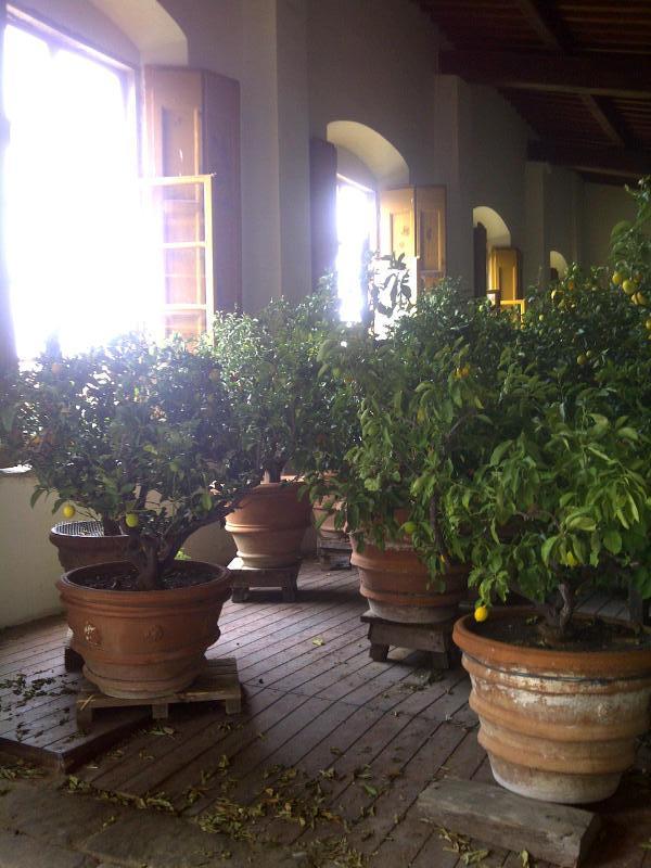 limonaia at Villa Gamberaia