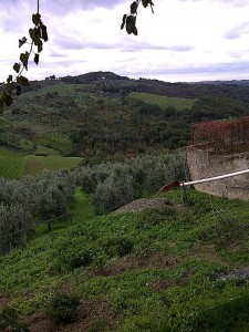 Vinyards and olive groves San Casciano in Val di Pesa